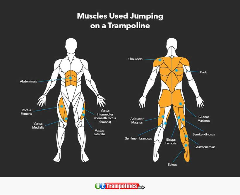 Oz Trampolines - Muscles You Use Jumping Trampoline (3)